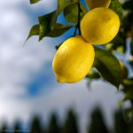 Online votes can bring lemon trees to San Francisco Photo: WarzauWynn / flickr