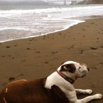 Jazzy still loves her trips to Baker Beach    (Photo: steve russell)