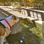 Jazzy's last trip to the Davis fountain