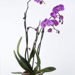Orchids: Care and feeding
