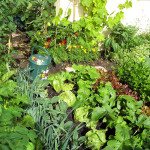 Start gardening now for summer enjoyment