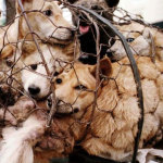 Stop China's dog, cat torture festival