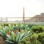 New Presidio Parklands  Project Public Design Workshop