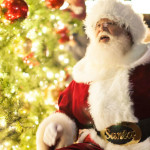 51st Annual Ghirardelli Square Tree Lighting Ceremony